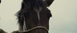 Czas Wojny / War Horse (2011) PL.DVDRip.AC3.XviD-4CT   |Lektor PL +rmvb
